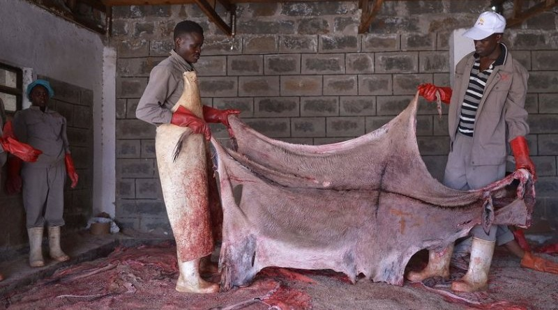 Workers hold a donkey's hide before curing at a licensed slaughterhouse specialised in donkeys in Baringo, on February 28, 2017.  The emergence of the global trade in donkey hide attributed mainly to the rise of Chinas middle class and an increased perception of the medicinal efficacy of a gelatine derived after boiling the hides, that is a key ingredient in a medicine called 'ejiao' has raised the price and the rate of slaughter of the animal. / AFP PHOTO / TONY KARUMBA        (Photo credit should read TONY KARUMBA/AFP/Getty Images)